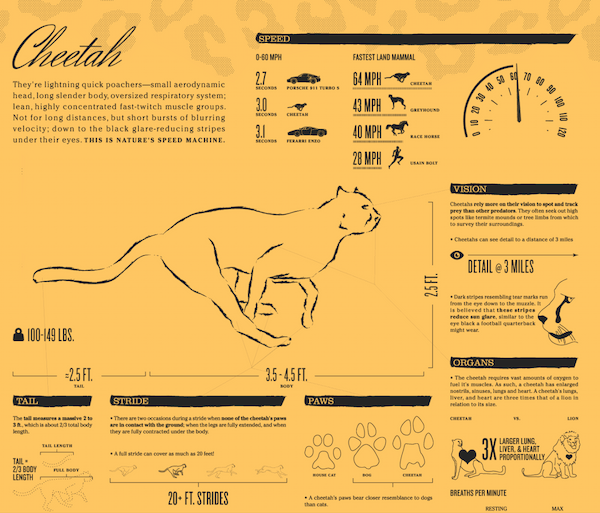 You can pack a lot of information into even a small design using an infographic.